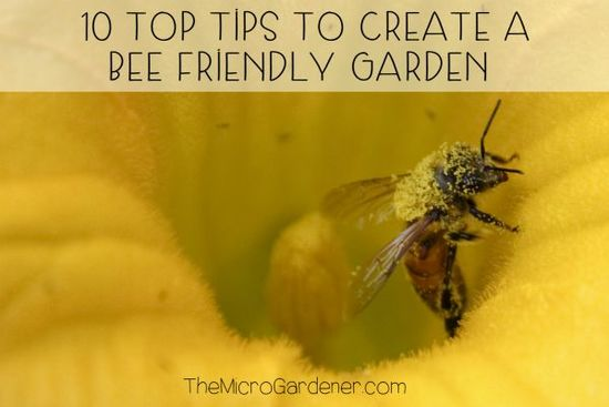 10 Top Tips to Create a Bee Friendly Garden