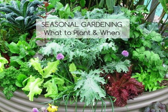 Seasonal Gardening Workshops - Sunshine Coast libraries