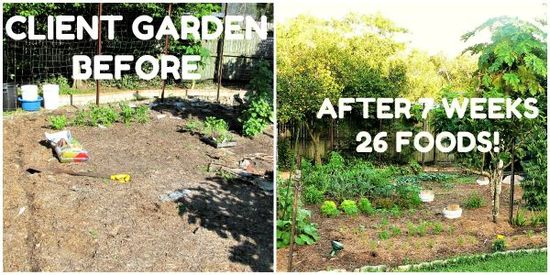 The Micro Gardener garden coaching - shortcuts to success with healthy abundant food gardens in weeks