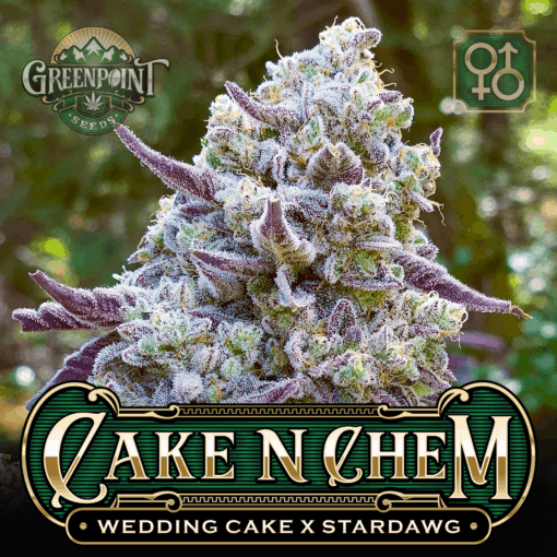 Cake N Chem